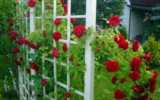 Подбираем растения для вертикального озеленения участка