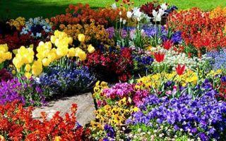 Клумба без забот — подбор растений