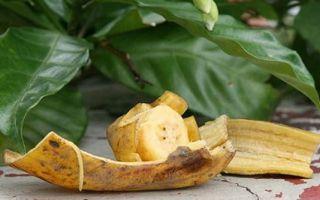 Как сделать банановую подкормку для цветов