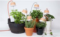 Досвечивание растений в домашних условиях