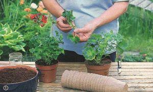 Размножение комнатных растений — удивительное занятие