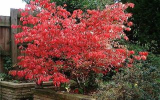 Растения солитеры — оригинальное решение для вашего сада