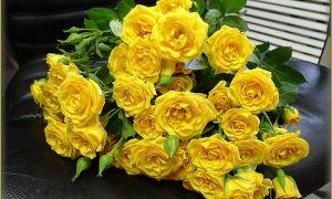 Желтые розы — значение цвета