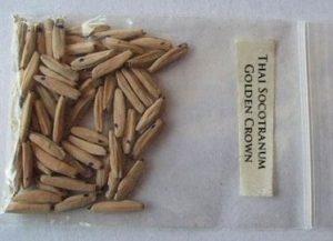 адениум из семян