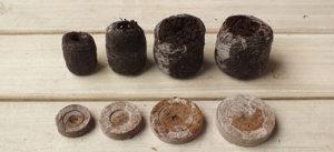 размножение гибискуса в торфяных таблетках
