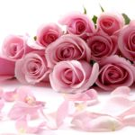 розы как бизнесс