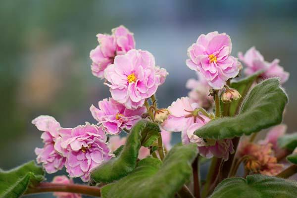 тенелюбивые комнатные цветы