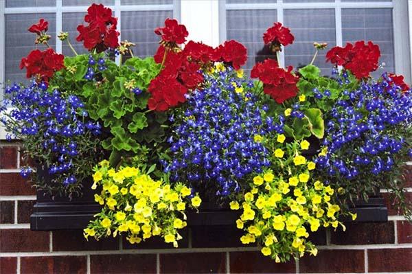 Цветы на дом псков