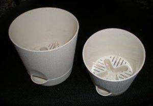 Размножение цикламена в домашних условиях