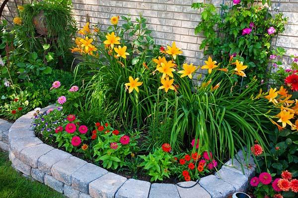 фитоспорин для цветов защита ваших клумб