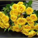 желтые розы значение