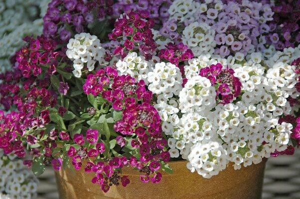 почему цветы пахнут