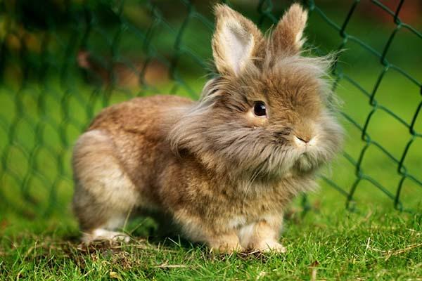 навоз кролика