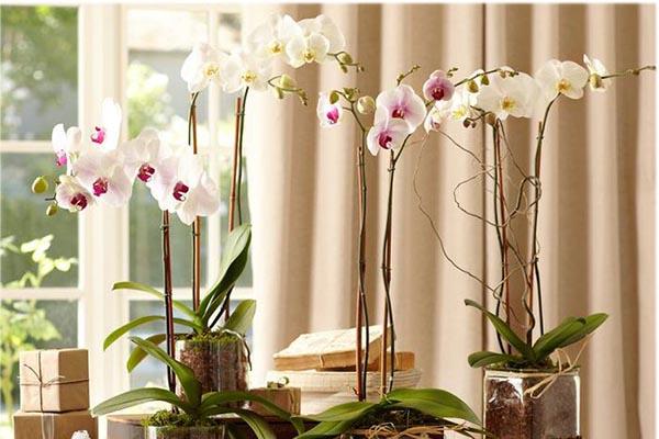 интересное о цветах - орхидея