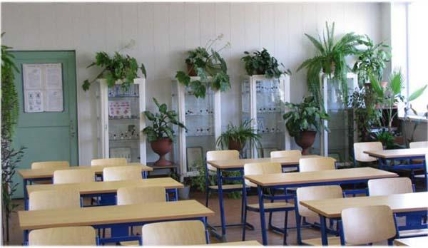 комнатные цветы для школы