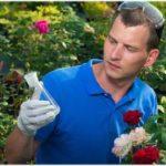 фунгициды для роз