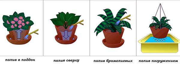 полив комнатных цветов