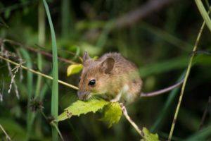 защита растений от мышей