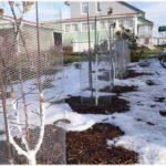 защита растений от грызунов