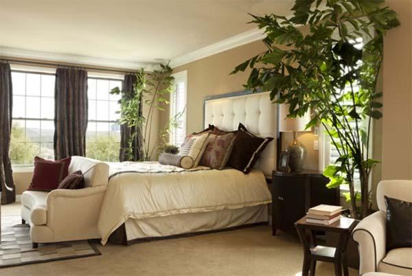 Комнатные цветы в спальни