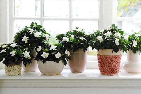 комнатные цветы для спальни